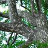 Branch0628